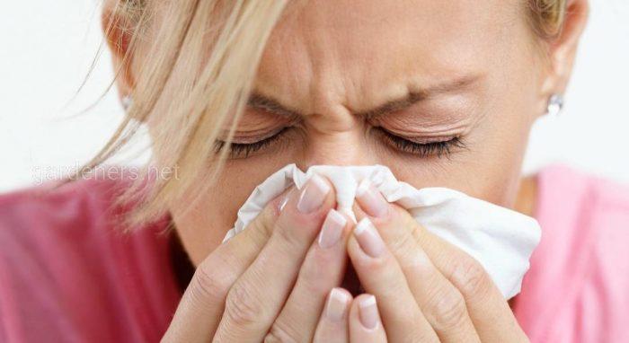 Ренит аллергический